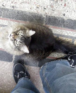 NAH POP NO CAT